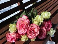 roses-1246490_1280min